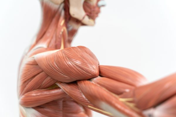 The Common Link in Soft Tissue Injuries